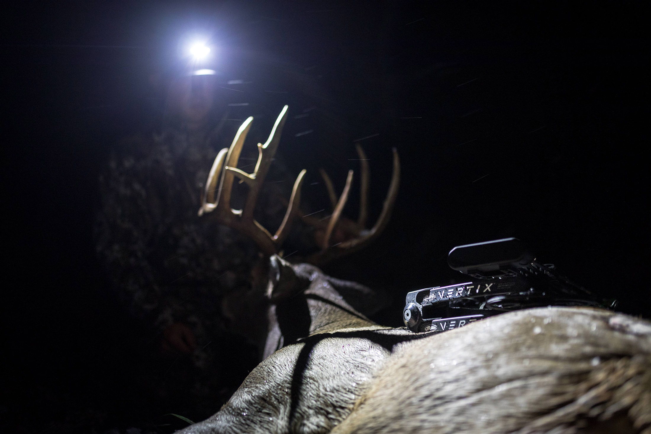 2019 Mathews Vertix Elk Hunting Photo