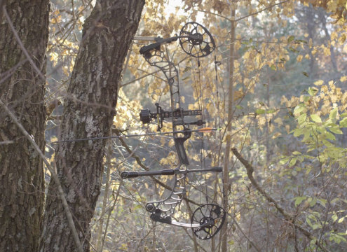 2019 Mathews Vertix Hunting Bow Hanging
